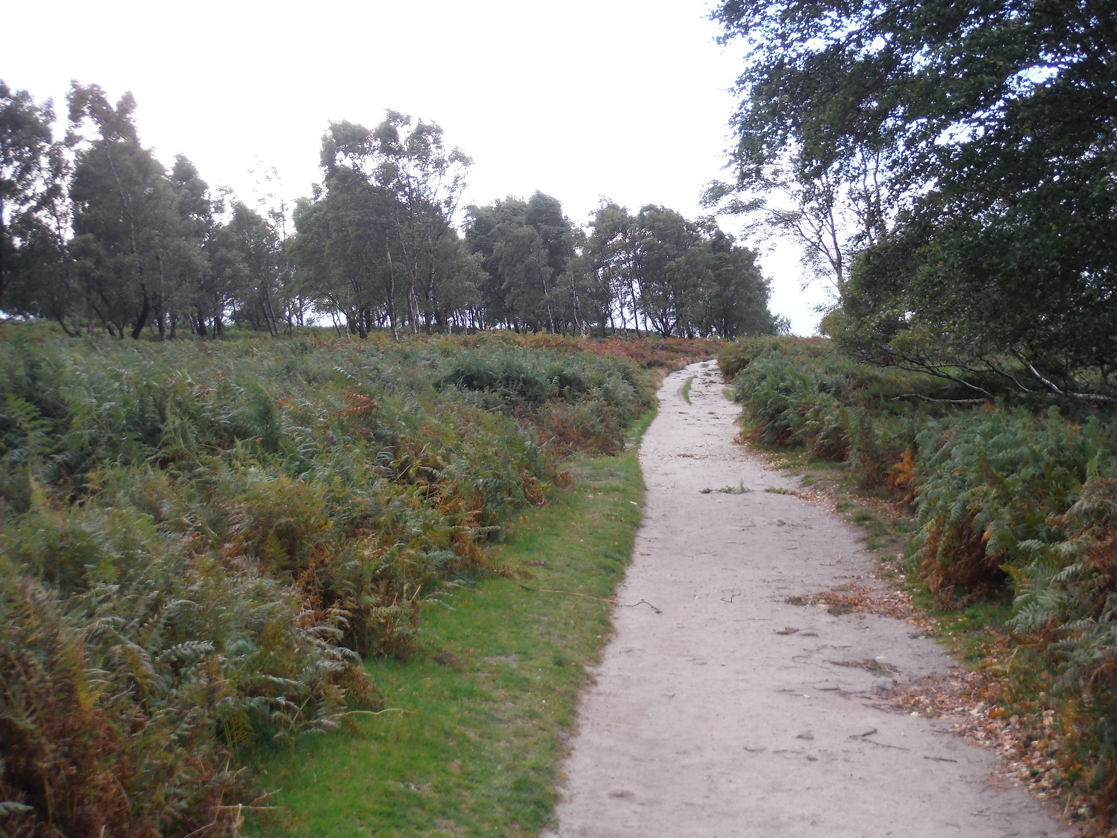 Sandy Path through Bracken and Scattered Trees, Froggatt Edge SWC Walk 322 - Grindleford Circular (via Chatsworth House)