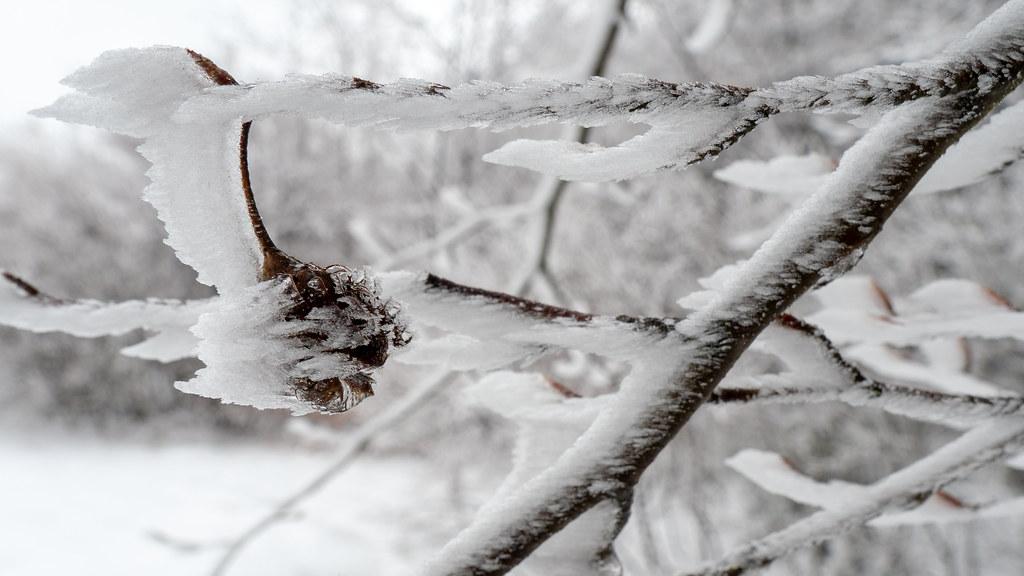 Streamlined frost