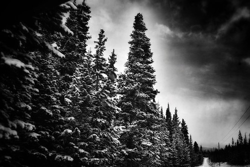 redfeatherlakes colorado landscape rooseveltnationalforest blackandwhite powerline road scenery winter snow forest trees