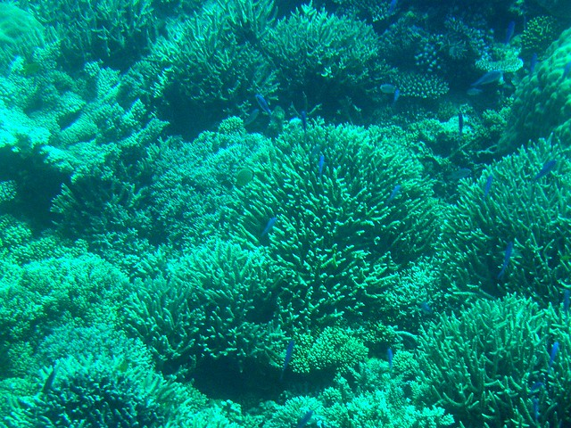 Coral in Green, Fish in Blue