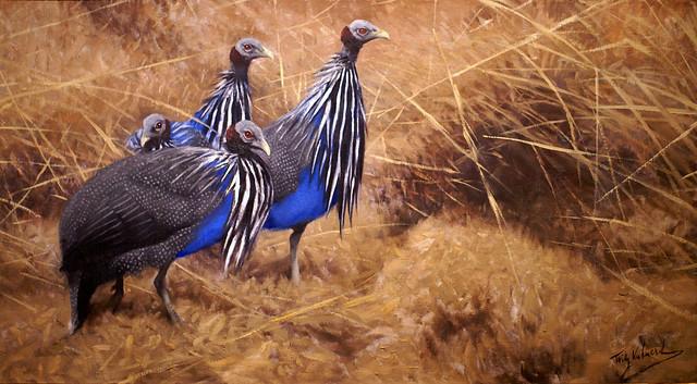 Wilhelm Kuhnert, Geierperlhühner - Guinea fowl