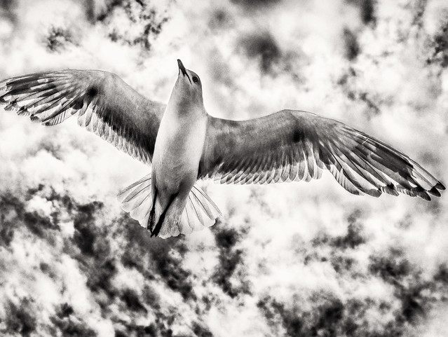 Transparent Wings