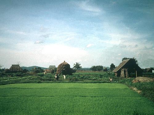 malacca malaysia kampong paddyfields sightseeing