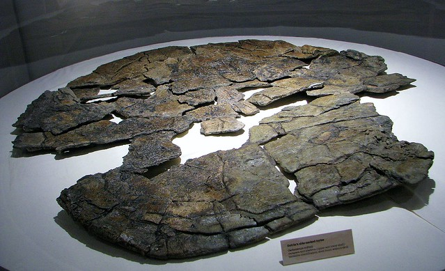 Carbonemys cofrinii --  an extinct neotropical turtle 4555