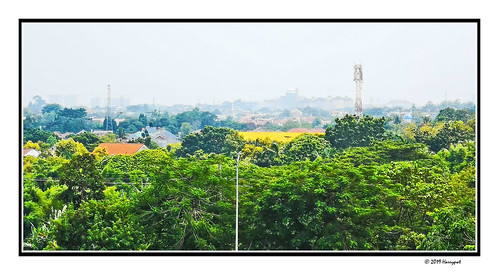 harrypwt indonesia jakarta city huaweip20pro p20 leica borders framed nature trees green paintinglike landscape