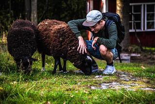 kesa-patikoija-lammas