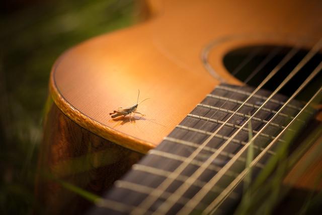 Guitar Break