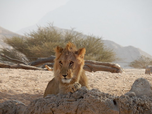 Al Ain Zoo - safari - 4
