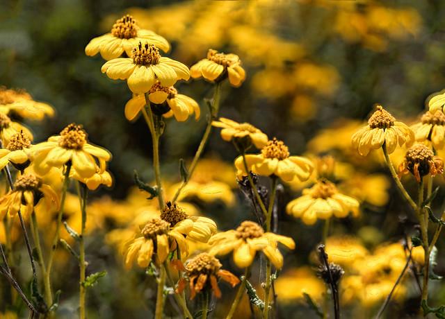 Yellow's Springtime Fashion