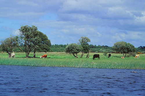 ireland shannon river boat cruise water nature animals wildlife landscape athlone lough ree lake clonmacnoise church abbey ruins