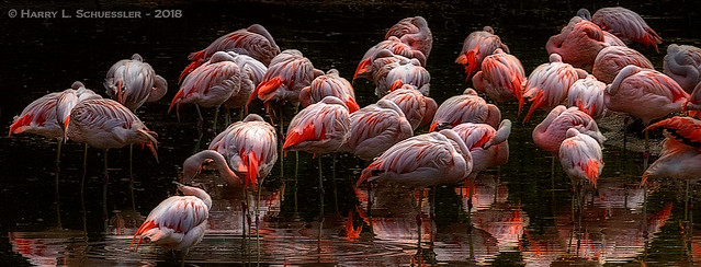 Flamingo Abstract