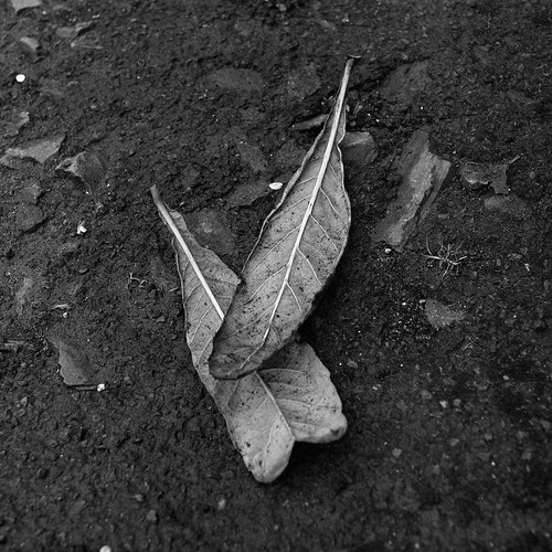 Two Leaves | by ss9679