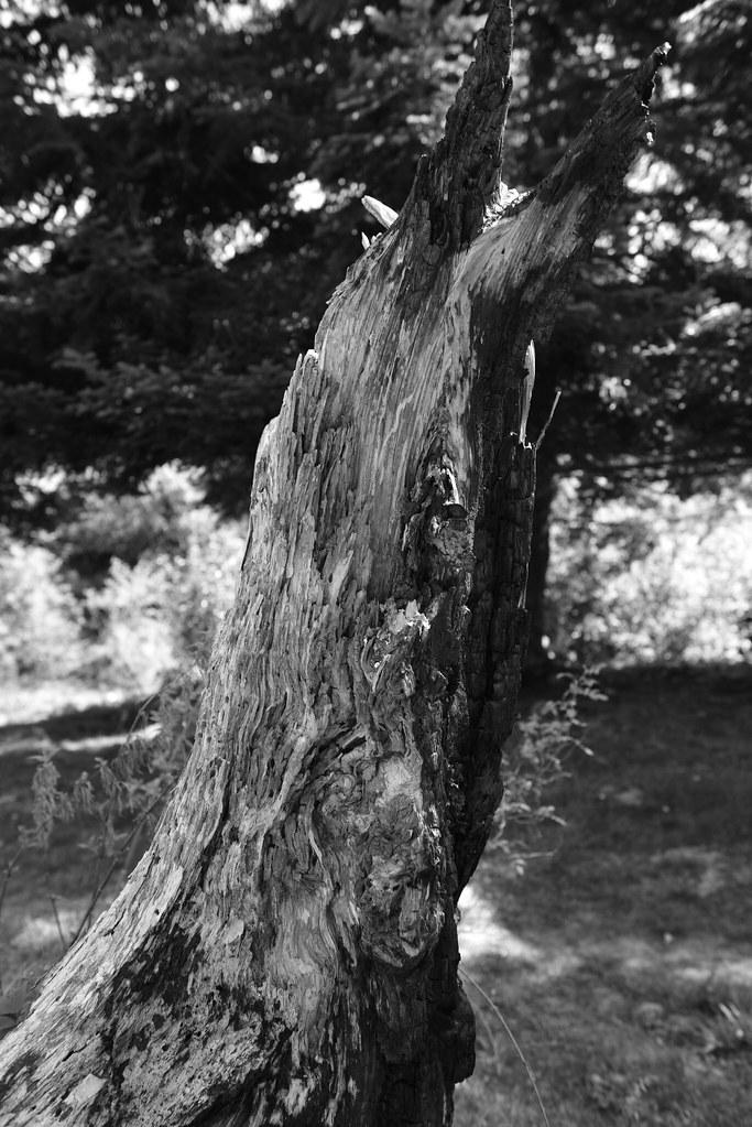 Sculpture - arbre
