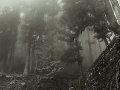 Forest surrounding the Mausoleum