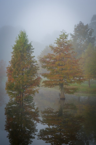 burroughspark cedar fog lake marchspond park pond reflctions trees water tomball texas unitedstates us cypress
