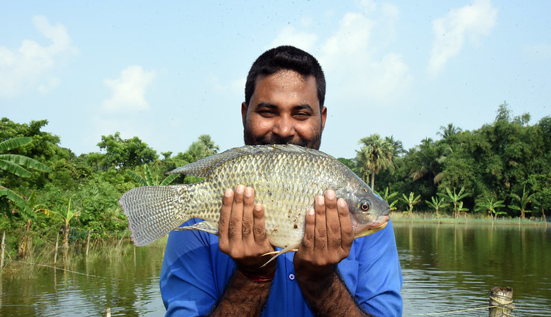 GIFT tilapia farmer Pradosh Kumar Acharye, Kishorenagar, Cuttack, Odisha, India. Photo by Arabinda Mahapatra.
