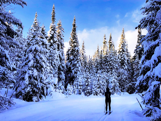 skiing in a fairytale forest