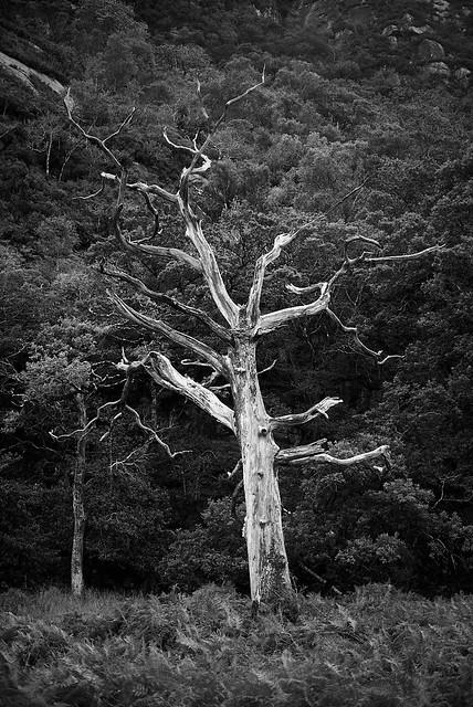 white_tree_L2014160