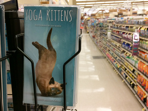 """In a very quiet @jewelosco, I called my wife and exclaimed, """"they have YOGA KITTENS!!!""""—just so people were like WTF 