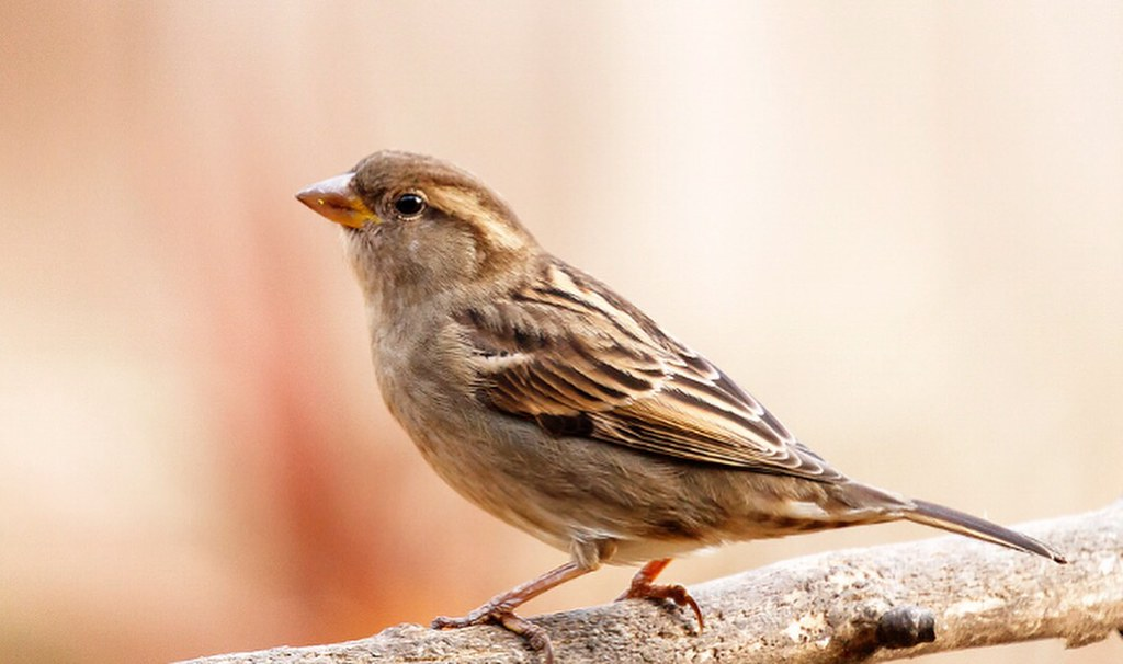 All Seasons Are Beautiful For The Person Who Carries Happiness Within Monday Afternoon Cute Sparrow Bird Birdsofinstagram Focus Canon Eos80d Ef100mm Macro Photography All Seasons Are Beautiful Quote Smile Love A Photo