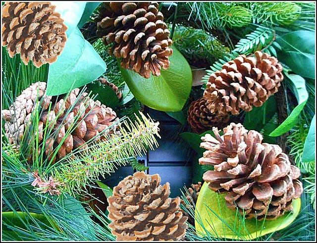 Pine Cones ..