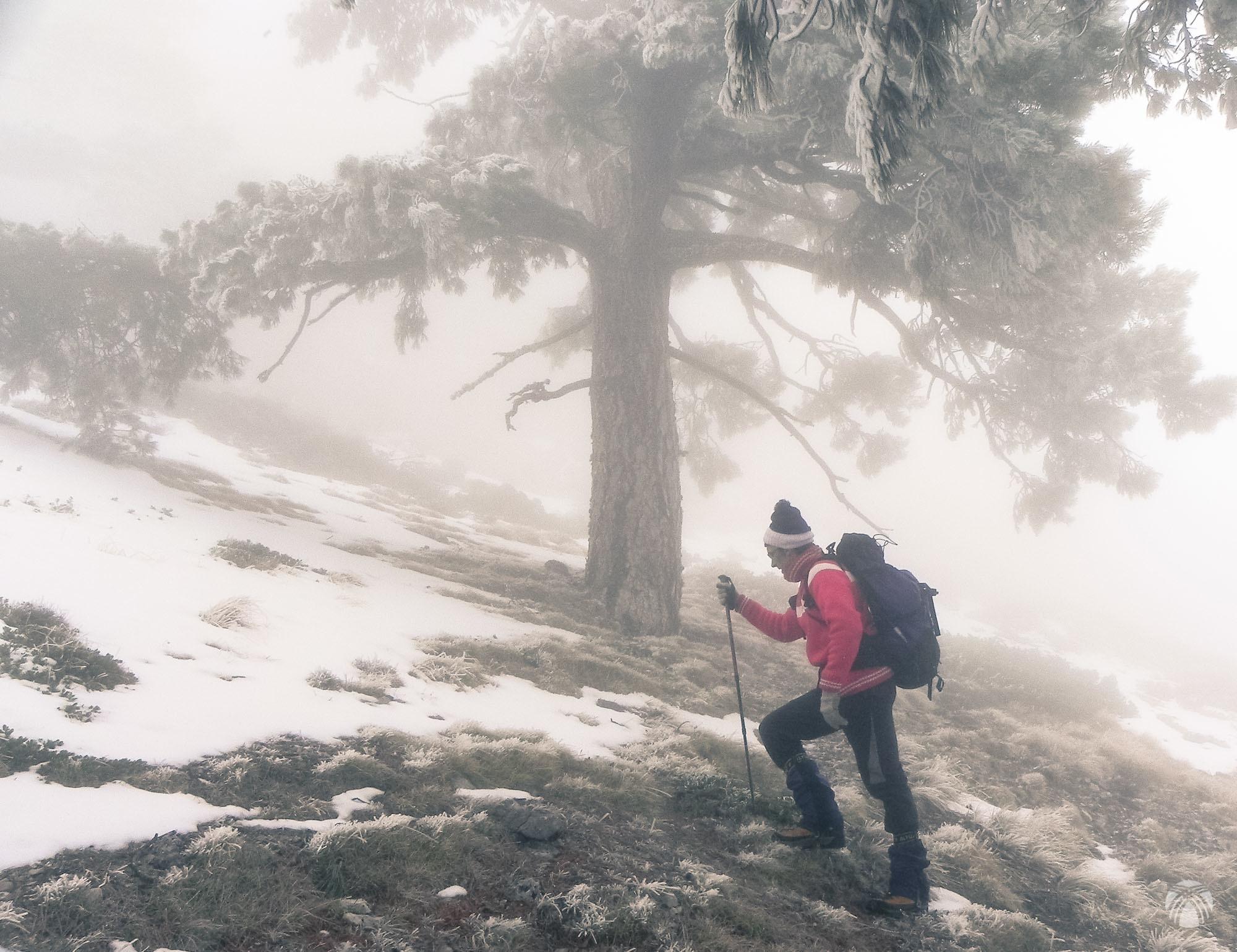 En la zona superior los pinos son enormes y solitarios