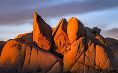 Joshua Tree Rocks at Sunrise