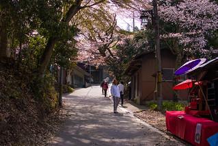 Mt Yoshino Sakura - Nara, Japan   by inefekt69