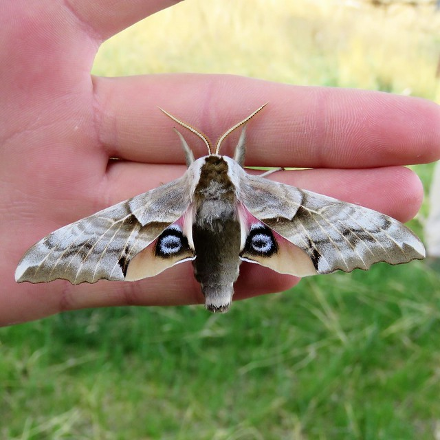 Mask or Moth?