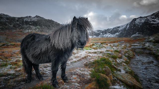Mountain sweetheart...x