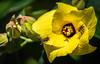 Sweet Nectar by Jims_photos