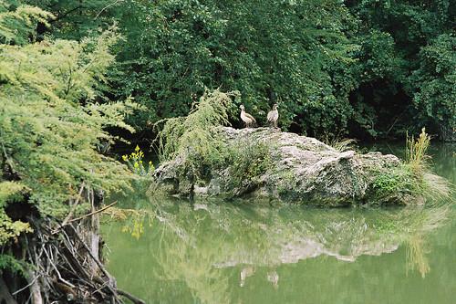 kodak 400uc om1 bandera texas medinariver ducks