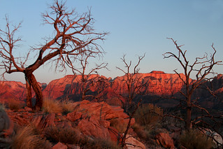 Zion's west Temple at sun set
