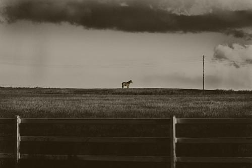 bw blackandwhite sepia landscape horse storm clouds middleroad peakcrossing queensland australia nikond750 sigma150600mmf563dgoshsmsports outdoors