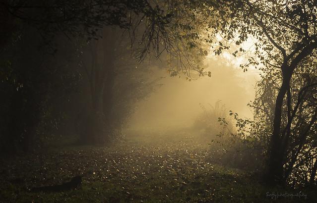 Brume sur le chemin