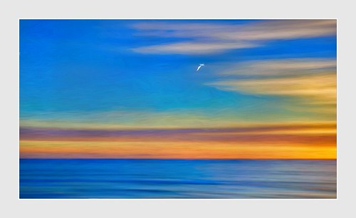 Tern At Sunset | by Christina's World!