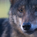 Beautiful eyes by pe_ha45