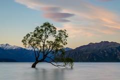 The Wanaka Tree-10