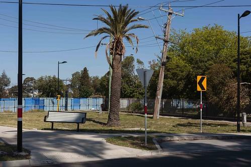 red sunshine melbourne victoria australia palm tree palmtree signs rrl pole leaningpole sign seat parkseat benchseat path bikepath arrowsign powerpole leaningpowerpole lines powerlines bushes shrubs park yellowsign trove australiainpictures troveaus unfound tmblrpc3020 art urbanlandscape