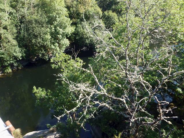 Árbores de ribeira. Riverside Trees. Rio Miño.