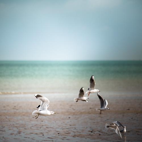 Birds & beach   by Zeeyolq Photography