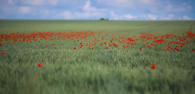 flower power field