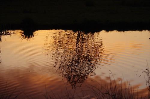 sunrise reflection silhouette sundorne shrewsbury shropshire weather light sky trees autumn