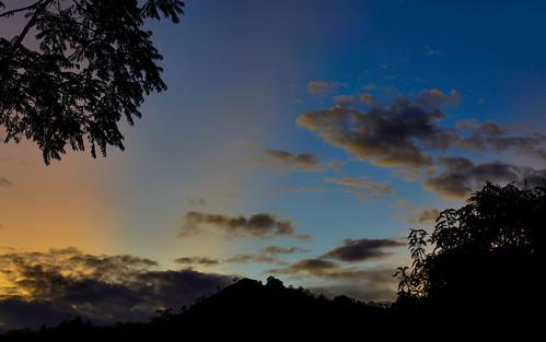 sky trees nwn dusk nubes clouds
