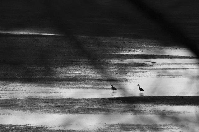recourse #fineartphotography #fineart #fineartphoto #birds #dream #dreamcatcher #peace #happyness #freedom #photography #capture #moments #natgeoindia #birdsentuary #wildlifephotography #wildlifephoto #discovery #wildlifeonearth #wildlifephotography #natu