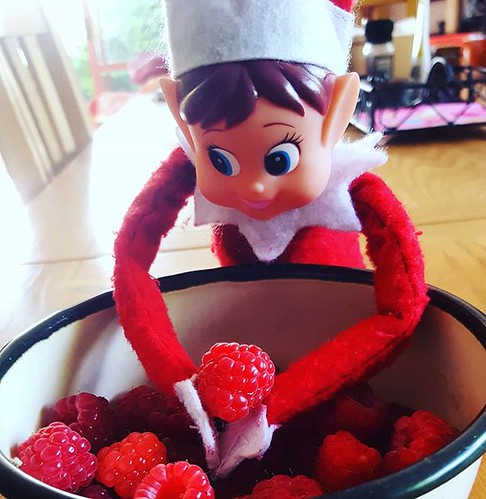 Caught! #elfhanded #raspberrythief #yumyum #elfontheshelf #elfantics #elfbehavingbadly Image description: toy elf with her hands in a bowl of freshly picked, deliciously red raspberries. | by easegill