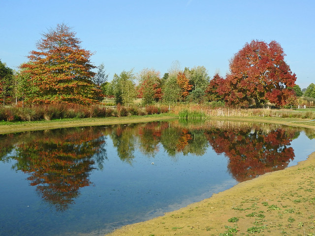 Autumn colours reflected in the lake at Hyde Hall gardens