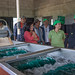 Vegetables - Rikolto LATAM en PROVIASA (Honduras)