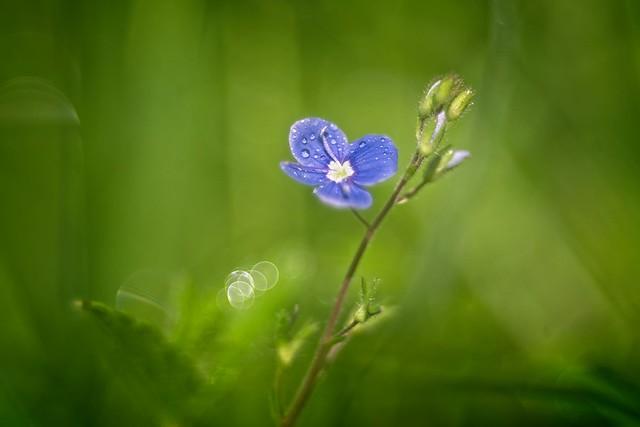 Little wild flower