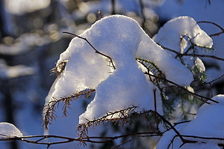snow closeup 1 | by scott1346